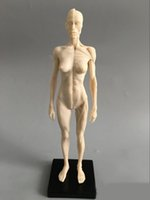 anatomical male models - cm Art mannequin musculoskeletal anatomical model structure of human body model CG Art Painting Sculpture model male female