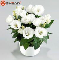 al por mayor flor eustoma-Semillas de Eustoma blanco Plantas de floración perenne Plantas de flores de maceta de balcón Lisianthus para jardín de bricolaje - 100 PCS
