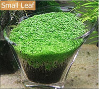 aquarium ornamentals - 200 Aquarium Plants Seeds Glossostigma Hemianthus Callitrichoides Water Aquatic Fish Tank Ornamentals Landscape Decoration
