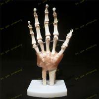 anatomy training - Human Life Size Life Size Hand Joint with Ligaments Model Medical Anatomy anatomical shadow brain skullmedical training manikins