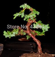 Wholesale arden Tools Pruning Tools Craft Aluminium Wire Bonsai Training Tools BONSAI SHAPING WIRE BROWN ANODISED ALUMINIUM MM THICK g About