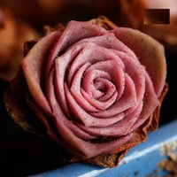 Wholesale Greenovia El Hierro Seed Greenovia Aurea Pretty Pink Colors Mountine Rose Newly Fresh Seeds Pieces Per