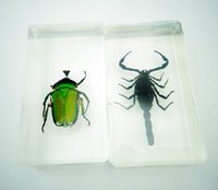Wholesale Vintage black scorpion green beetle acrylic paperweight yqtdmy Crafts