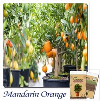 gran orgánico al por mayor-20 / Bag Bonsai Orange Tree Semillas Organic Fruit Tree Seeds Para plantadores de macetas muy grandes y deliciosos
