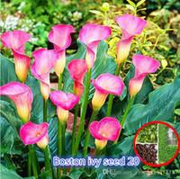 Семена цветущие Цены-100 шт. Calla Lily Семена комнатных цветов Zantedeschia Aethiopica Bonsai Комнатные растения Home Garden Pot Plant Легко выращивать