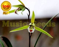 Wholesale 1BAG hot sale JAPANESE rare smile orchid seeds mini bonsai spring plant exotic flower seeds home and garden