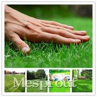 Wholesale 100 bag special grass seeds Lawn Grass Seeds evergreen perennial grass seeds for garden football and golf place