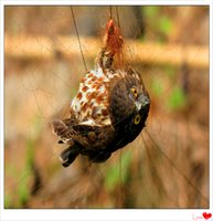 Wholesale High Quality Bird traps and snares with low price from China