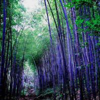 bamboo tree plant - A Package Pieces Seeds Rare Purple Bamboo Seeds Decorative Garden Lucky Bamboo Garden Plants Seeds