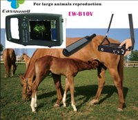 Wholesale Veterinary handheld ultrasound scanner EW B10V with Rectal probe for pregnancy