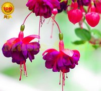 Wholesale 1Bag Hot Sale fuchsia seeds Japanese lily bulb flower seeds Lilac Bonsai cherry Tomato for Home Garden