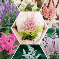 astilbe flower - Dwarf Astilbe chinensis seeds elegant Cohosh seeds ornamental flowers