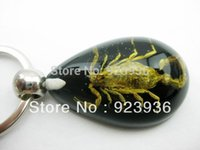 Wholesale chain ladder of Scorpion Insect Key Chain with Real Scorpion New