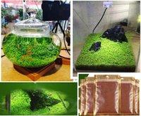 aquarium ornamentals - Aquariums Fish Tank Plant Seeds Glossostigma Hemianthus Callitrichoides Water Aquatic Fish Tank Ornamentals Landscape Decoration