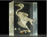 vrais squelettes achat en gros de-Pigeon Squelette Spécifique Résine Acrylique Embedded Real Skeleton Biology Kits Transparent Souris Paperweight Nouveau étudiant Science Education Cadeaux