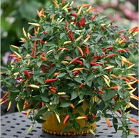 achat en gros de graines de plantes d'héritage-Heirloom 100pcs / lot Thai Sun Hot Pepper Capsicum Annuum Ornamental Chili Seeds Bonsai Plant Mini Hot Pepper Seeds Livraison gratuite