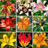 balcony terrace - A Package Pieces Lily Seeds Balcony Bonsai Courtyard Garden Terrace Plant Lilium Brownii Flower Seeds Varieties choose