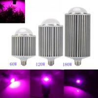 Wholesale 60W W W COB LED Grow Lights Full Spectrum E27 LED Plant Grow Light for Indoor Garden Veg Flowering Hydropoincs Grow Tent AC85 V