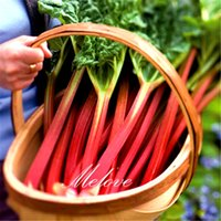beets vegetables - 100 Leaf Beet Swiss Chard Vegetable Seeds DIY Home Garden Heirloom Vegetable Fast and Easy to Grow