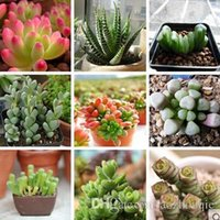 Wholesale Mixed style mini succulent flower seeds green plants succulent for living room as home decoration
