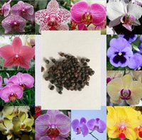 Wholesale Hot New Rare Packs Colors Color Phalaenopsis Flower Seeds Bonsai Plant Butterfly Orchid Yard Decoration