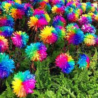 Семена цветущие Цены-Красивые 20 / Lot Радуга хризантема семена цветов редкий цвет нового прибытия DIY Home Садовый цветок завод