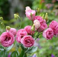 al por mayor flor eustoma-Red Eustoma semillas Plantas de floración perenne Lisianthus Multicolor para DIY Hogar Jardín - 100 PCS