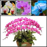 Семена цветущие Цены-Phalaenopsis Moth Семена орхидеи Цветочные семена Бонсай растения Семена комнатные растения для дома садовые цветочные горшки 25pcs / lot