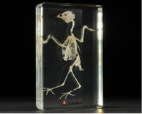 acrylic paperweight - Sparrow Skeleton Specimen Acrylic Resin Embedded Skeleton Biology Teaching Kits Transparent Mouse Paperweight Student Science Learning Gifts