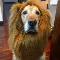 Wholesale Halloween Clothes Pet Costume Lion Mane Wig for Large Dogs Cat Fancy Dress Up Can Be Adjustable