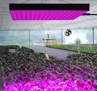 Wholesale 45W LED Red Blue Hanging Light for Indoor Plant plant factory greenhouse farming flower farming indoor gardens