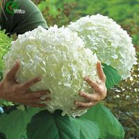 Wholesale Hydrangea Seeds Mixed Hydrangea Flowers Garden Plant Bonsai Viburnum seeds H002