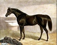Enmarcado caballo de carreras de pura sangre caballo de gladiador negro semental, pintura al óleo pintada a mano puro pura pintura al óleo multi pintura HS0035