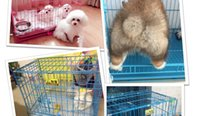 Wholesale Bold stainless steel ribbon skylight teddy rabbit cage cat cage small dogs dog cage pigeon house pet folding dog kennel
