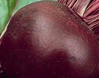 Common beets seeds - 1000Pcs A Set Dark Red Beet Carrot Rare Seed Both Suitable To Buy In This Lovely Store