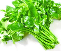 Wholesale 2017 Water Spinach Vegetable Seeds Bag Easy to Grow from Seeds Heirloom Vegetable Seed Very Delicious and fresh