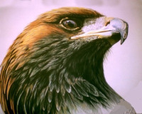 animal hawk - HAWK EAGLE HEAD PORTRAIT WILD BIRD Pure Handpainted WILDERNESS Art Oil Painting On Quality Canvas customized size accepted sal