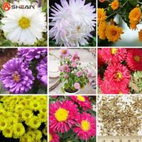 asters plant - 9 Color Available Callistephus Chinensis Seeds Balcony Potted Bonsai Plant Flower Seed Aster Seeds A Pack
