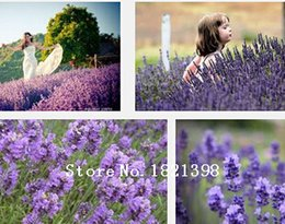 Wholesale free seed catalogs by mail buy cheap free seed catalogs by