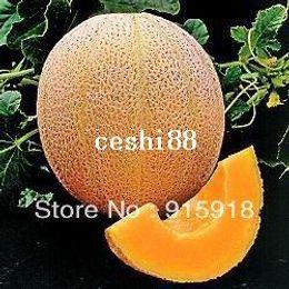Wholesale Cantaloupe Hales Best Jumbo Melon Great Heirloom Vegetable Seeds By Seed Kingdom