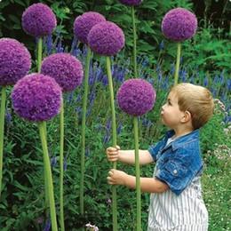 Wholesale Purple Giant Allium Beautiful Flower Seeds Garden Plant Rare Flower Particles
