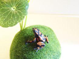 Wholesale sale brown frog doll house miniatures lovely cute fairy garden gnome moss terrarium decor crafts bonsai DIY