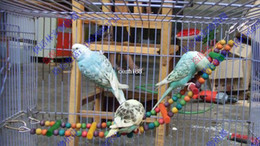 Wholesale Small parrot wood toy parrot toy
