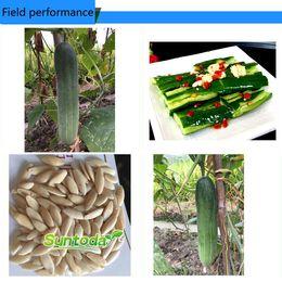 DIY Garden Asian vegetabl F1 hybrid slicing, pickling, and seedless cucumber Cucurbitaceae.wild cucumber Cucumis sativus NON GMO green seeds