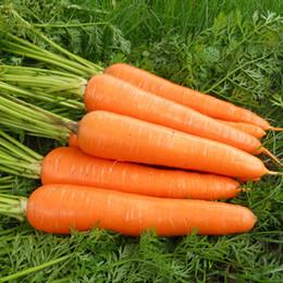 400 Carrot Seeds Healthy Garden Vegetable Non GMO Free Shipping