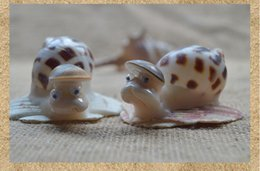 Wholesale Best Beach Wedding Decorations Cowry Shell Conch Sea Snail Wedding Supplies Home Living Room Bedroom Decoration Wedding Centerpiece
