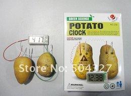 Wholesale Pieces SCIENCE MUSEUM Digital Potato Clock Green Science Vegetable Power
