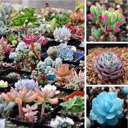 Wholesale 200 bag Mix Succulent seeds lotus Lithops Pseudotruncatella Bonsai plants Seeds for home garden Flower pots planters