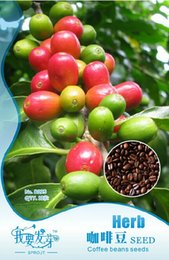 Wholesale 10 Original Packs seeds pack Coffee Bean Seeds ARABICA COFFEE Plant Coffea Catura Arabica SEEDS B095