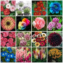 16 Varieties Flower Seeds Enjoy All Year Long Blooming DIY Garden Decoration Rose Dahlia Lavender Free Shipping